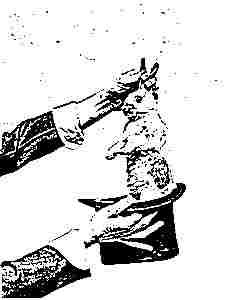 Фокус кролик из шляпы
